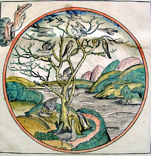 """Creation of the World. The work of the fifth day, Creation of Birds"", Nuremberg Chronicle, 1493"